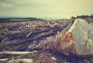 field-fallen-tree-tree-clearing